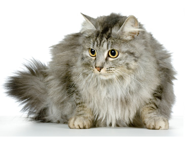 Signs of Aging in Cats